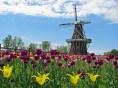 Holland-Tulip-Festival-Picture-2